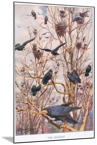 The Rookery, Illustration from 'Country Ways and Country Days'-Louis Fairfax Muckley-Mounted Giclee Print