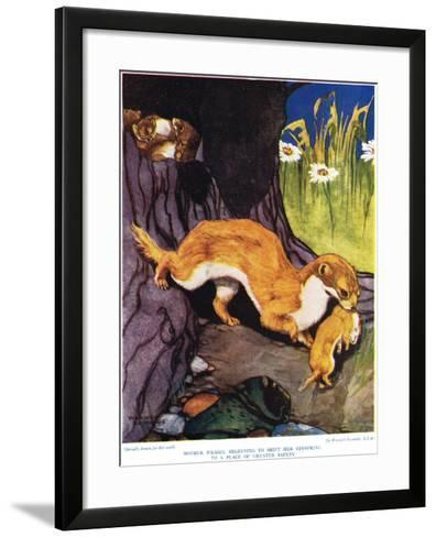 Mother Weasel Beginning to Shift Her Offspring, Illustration from 'The New Natural History', by…-Warwick Reynolds-Framed Art Print