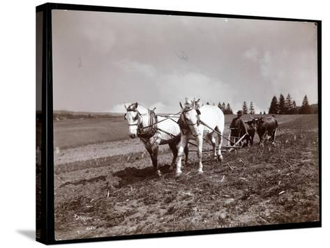 Ploughing on the Property of Alton Brooks Parker, Esopus Creek, New York, 1904-Byron Company-Stretched Canvas Print