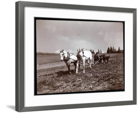 Ploughing on the Property of Alton Brooks Parker, Esopus Creek, New York, 1904-Byron Company-Framed Art Print
