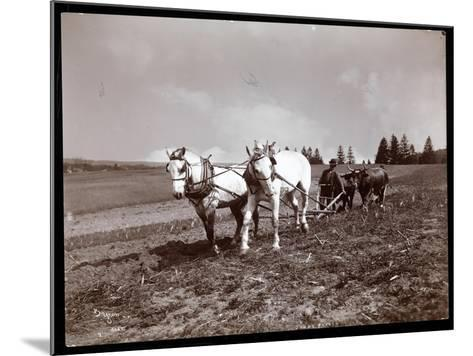 Ploughing on the Property of Alton Brooks Parker, Esopus Creek, New York, 1904-Byron Company-Mounted Giclee Print