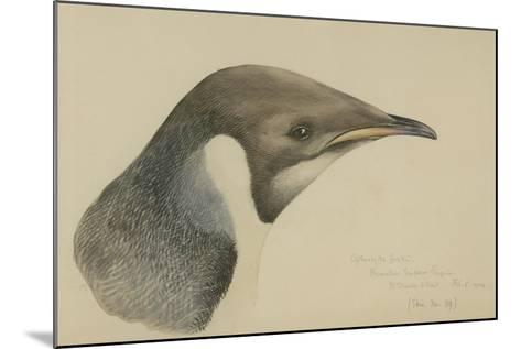 Immature Emperor Penguin, McMurdo Strait, 6 Feb, 1904-Edward Adrian Wilson-Mounted Giclee Print