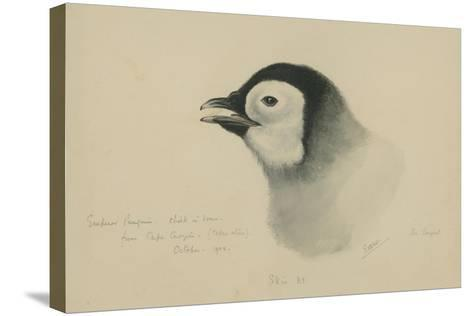 Emperor Penguin, Chick in Down, from Cape Crozier (Taken Alive), the Largest, Oct 1902-Edward Adrian Wilson-Stretched Canvas Print