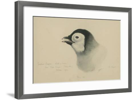 Emperor Penguin, Chick in Down, from Cape Crozier (Taken Alive), the Largest, Oct 1902-Edward Adrian Wilson-Framed Art Print