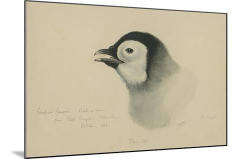Emperor Penguin, Chick in Down, from Cape Crozier (Taken Alive), the Largest, Oct 1902-Edward Adrian Wilson-Mounted Giclee Print