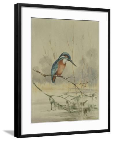 Kingfisher, Illustration from 'A History of British Birds' by William Yarrell, c.1905-10-Edward Adrian Wilson-Framed Art Print