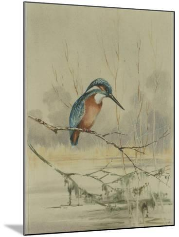 Kingfisher, Illustration from 'A History of British Birds' by William Yarrell, c.1905-10-Edward Adrian Wilson-Mounted Giclee Print