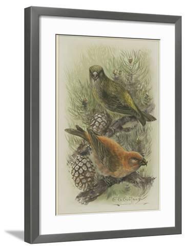 Crossbill, Illustration from 'A History of British Birds' by William Yarrell, c.1905-10-Edward Adrian Wilson-Framed Art Print