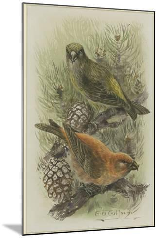 Crossbill, Illustration from 'A History of British Birds' by William Yarrell, c.1905-10-Edward Adrian Wilson-Mounted Giclee Print