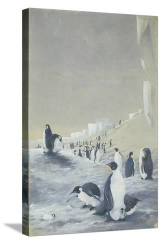 Emperor Penguin at Cape Crozier, Mar 28, 1911-Edward Adrian Wilson-Stretched Canvas Print
