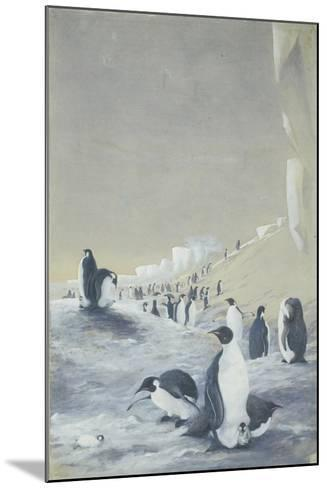 Emperor Penguin at Cape Crozier, Mar 28, 1911-Edward Adrian Wilson-Mounted Giclee Print