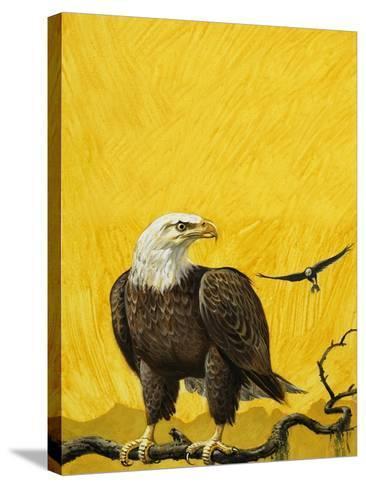 Eagle-English School-Stretched Canvas Print