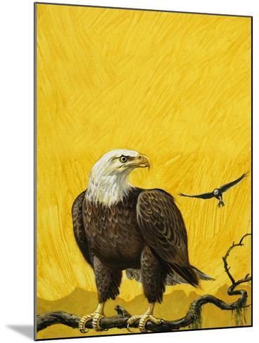 Eagle-English School-Mounted Giclee Print