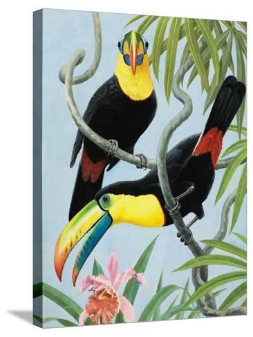 Big-Beaked Birds-R.B. Davis-Stretched Canvas Print
