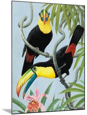 Big-Beaked Birds-R.B. Davis-Mounted Giclee Print