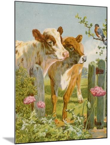 A Piping Bullfinch-English School-Mounted Giclee Print