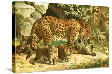 Leopards-English School-Stretched Canvas Print
