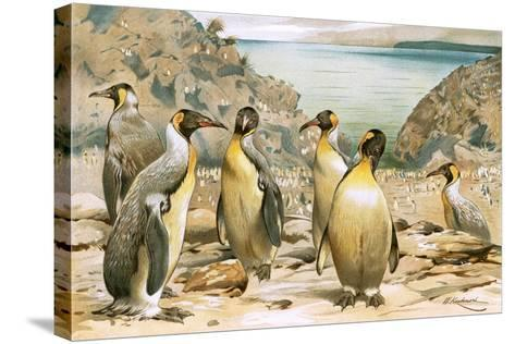 Giant Penguins-Wilhelm Kuhnert-Stretched Canvas Print