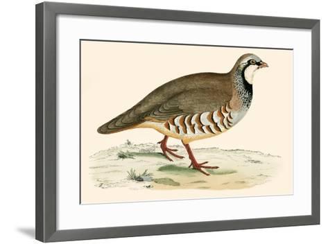 Red Legged Partridge-Beverley R. Morris-Framed Art Print