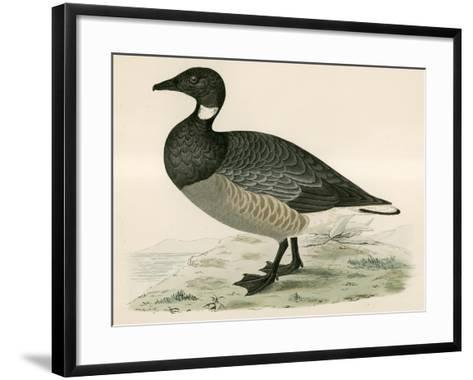 Brent Goose-Beverley R. Morris-Framed Art Print