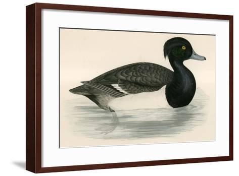 Tupted Duck-Beverley R. Morris-Framed Art Print