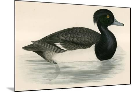 Tupted Duck-Beverley R. Morris-Mounted Giclee Print
