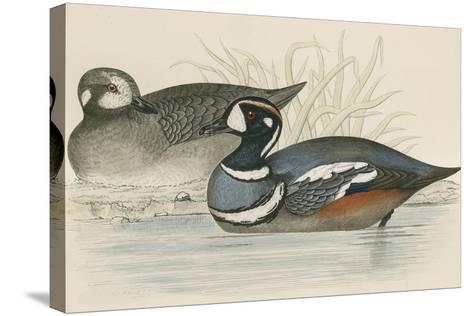 Harlequin Duck-Beverley R. Morris-Stretched Canvas Print