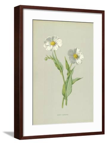 Snowy Crowfoot-Frederick Edward Hulme-Framed Art Print