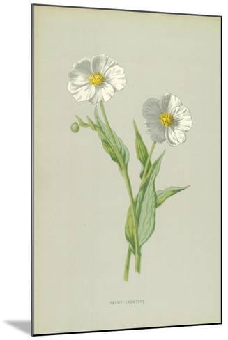 Snowy Crowfoot-Frederick Edward Hulme-Mounted Giclee Print