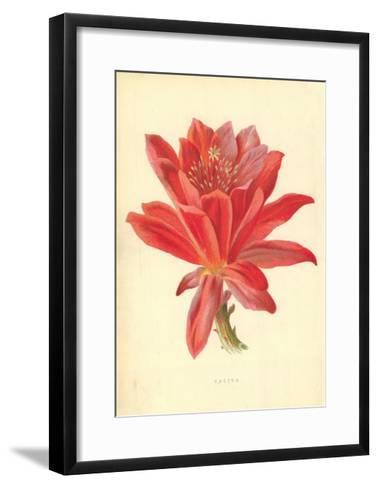 Cactus-Frederick Edward Hulme-Framed Art Print