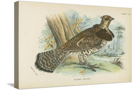 Ruffed Grouse-English School-Stretched Canvas Print