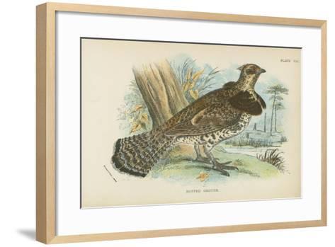 Ruffed Grouse-English School-Framed Art Print