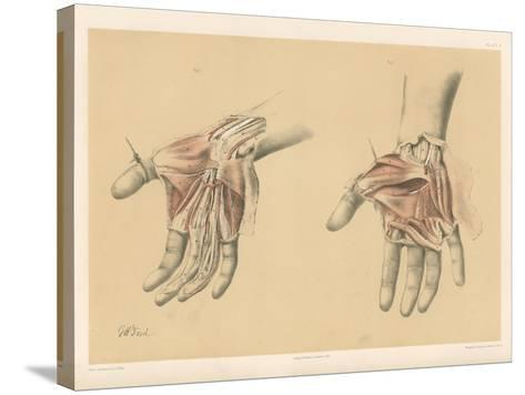 The Upper Limb. Superficial and Deep Views of the Palm of the Hand-G. H. Ford-Stretched Canvas Print