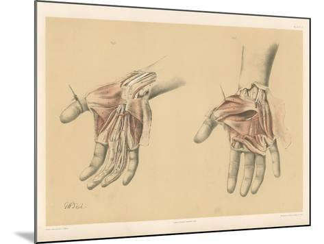 The Upper Limb. Superficial and Deep Views of the Palm of the Hand-G. H. Ford-Mounted Giclee Print
