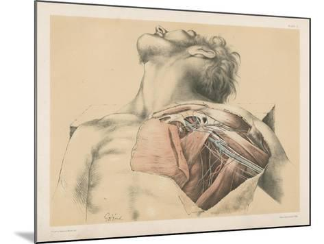 The Upper Limb. The Axillary Vessels, and the Brachial Plexus of Nerves, with their Branches-G. H. Ford-Mounted Giclee Print