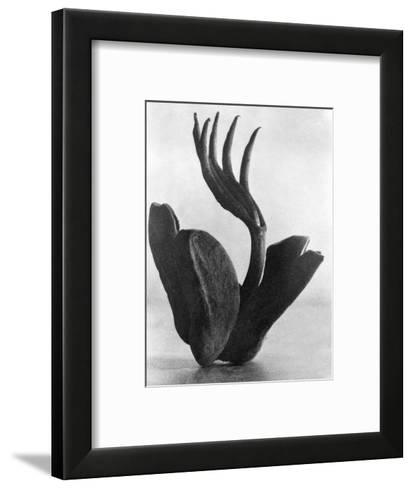 Flor de Manita, Mexico City, 1925-Tina Modotti-Framed Art Print
