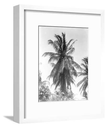 Palm Tree, 1925-Tina Modotti-Framed Art Print