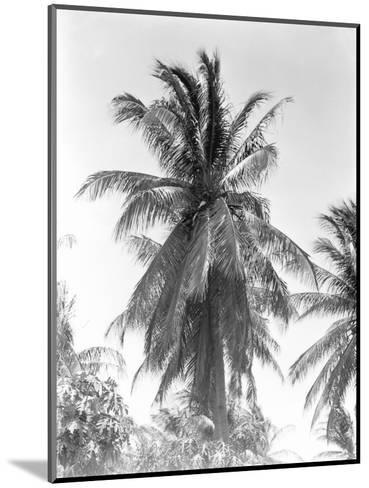 Palm Tree, 1925-Tina Modotti-Mounted Photographic Print