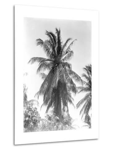 Palm Tree, 1925-Tina Modotti-Metal Print