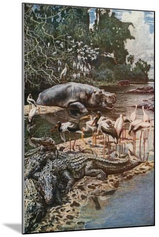 The Gambia River, as Described by Captain Jobson-Harry Hamilton Johnston-Mounted Giclee Print