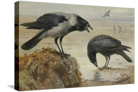 A Hooded Crow and a Carrion Crow, 1924-Archibald Thorburn-Stretched Canvas Print