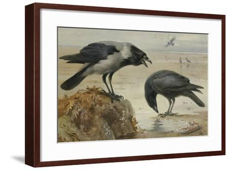 A Hooded Crow and a Carrion Crow, 1924-Archibald Thorburn-Framed Art Print