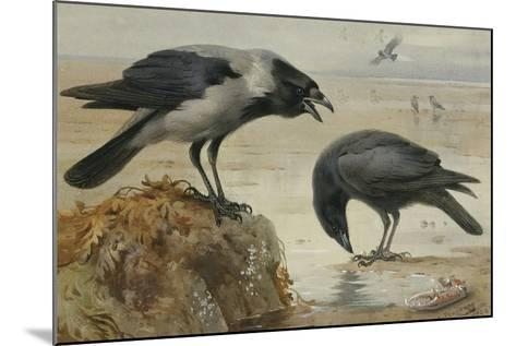 A Hooded Crow and a Carrion Crow, 1924-Archibald Thorburn-Mounted Giclee Print