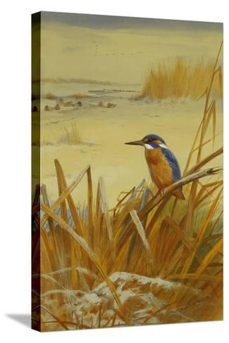 A Kingfisher Amongst Reeds in Winter, 1901-Archibald Thorburn-Stretched Canvas Print