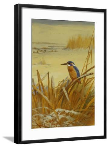 A Kingfisher Amongst Reeds in Winter, 1901-Archibald Thorburn-Framed Art Print