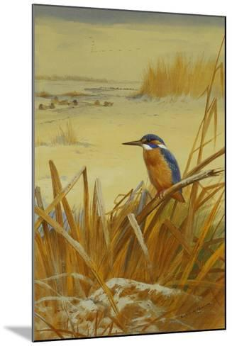 A Kingfisher Amongst Reeds in Winter, 1901-Archibald Thorburn-Mounted Giclee Print