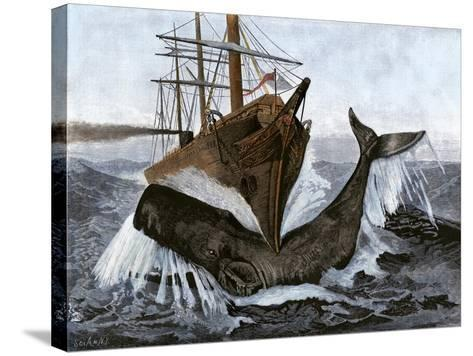 """Bow of the Ship """"Essex"""" Striking a Whale--Stretched Canvas Print"""