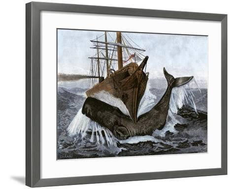 """Bow of the Ship """"Essex"""" Striking a Whale--Framed Art Print"""
