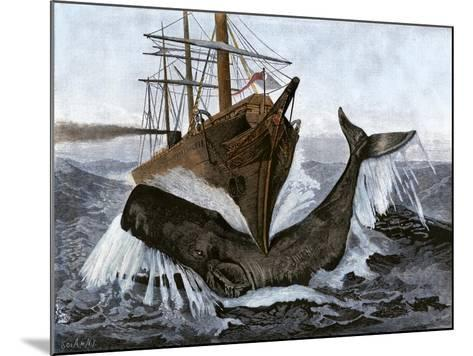 """Bow of the Ship """"Essex"""" Striking a Whale--Mounted Giclee Print"""
