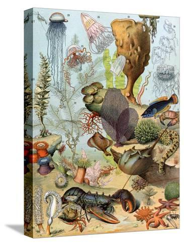 Life on the Sea Floor, Including Crustaceans and Molluscs--Stretched Canvas Print